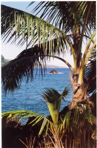 palms and ocean