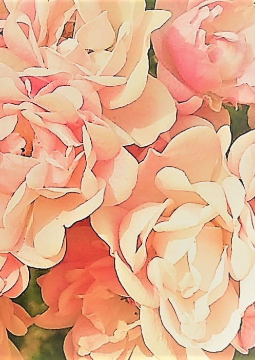 Roses cropped mod 2 half